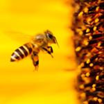 Exploataţii apicole